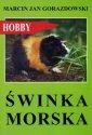 Świnka morska. Hobby - Wydawnictwo - okładka książki