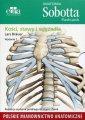 Anatomia Sobotta. Flashcards. Kości - okładka książki